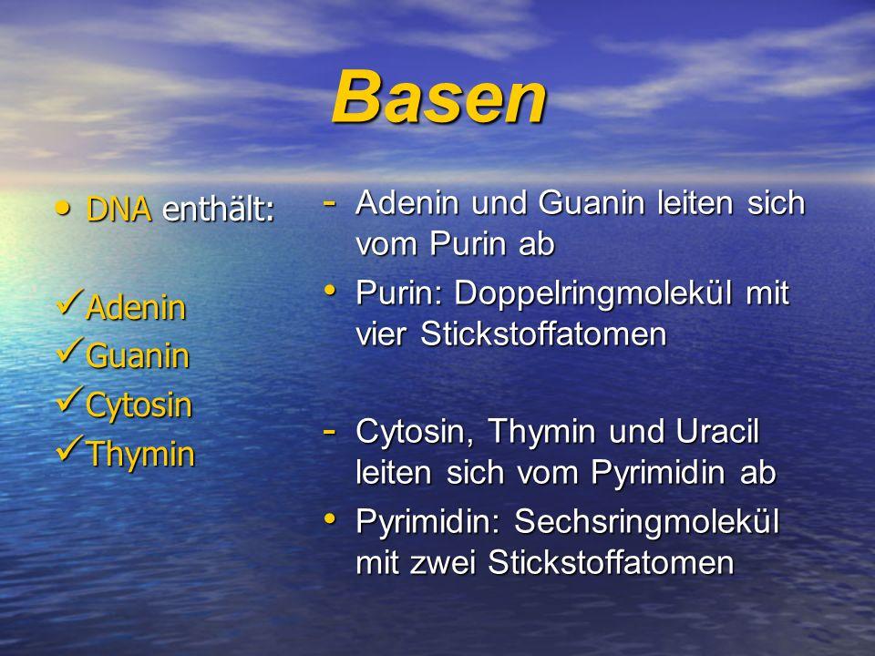 Basen DNA enthält: DNA enthält: Adenin Adenin Guanin Guanin Cytosin Cytosin Thymin Thymin - Adenin und Guanin leiten sich vom Purin ab Purin: Doppelri