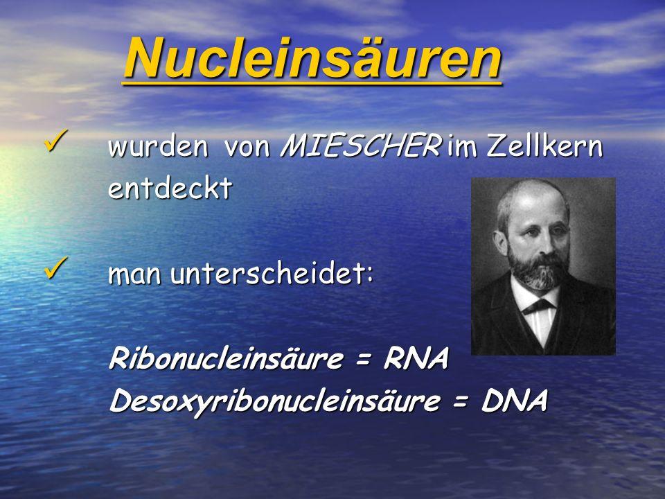 Nucleinsäuren wurden von MIESCHER im Zellkern wurden von MIESCHER im Zellkernentdeckt man unterscheidet: man unterscheidet: Ribonucleinsäure = RNA Des