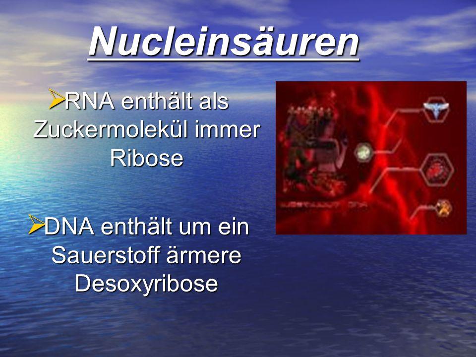 RNA enthält als Zuckermolekül immer Ribose RNA enthält als Zuckermolekül immer Ribose DNA enthält um ein Sauerstoff ärmere Desoxyribose DNA enthält um