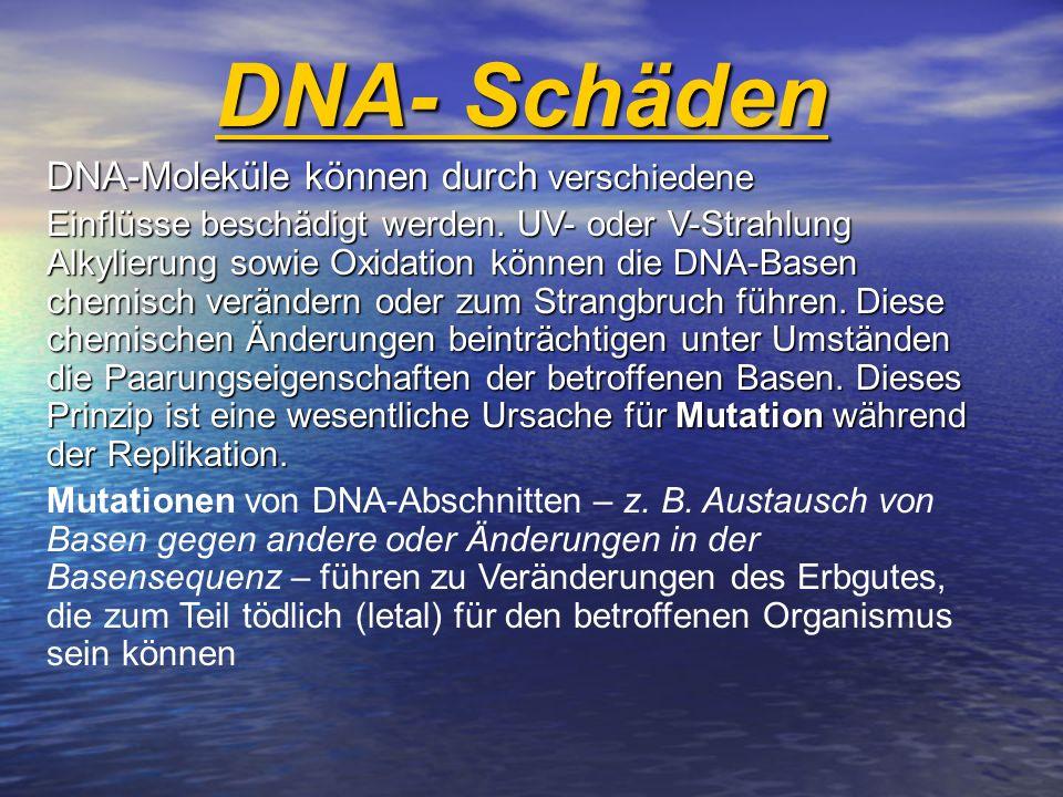 DNA-Moleküle können durch verschiedene Einflüsse beschädigt werden. UV- oder V-Strahlung Alkylierung sowie Oxidation können die DNA-Basen chemisch ver