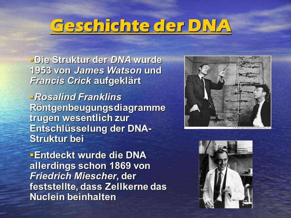 Geschichte der DNA Die Struktur der DNA wurde 1953 von James Watson und Francis Crick aufgeklärt Die Struktur der DNA wurde 1953 von James Watson und