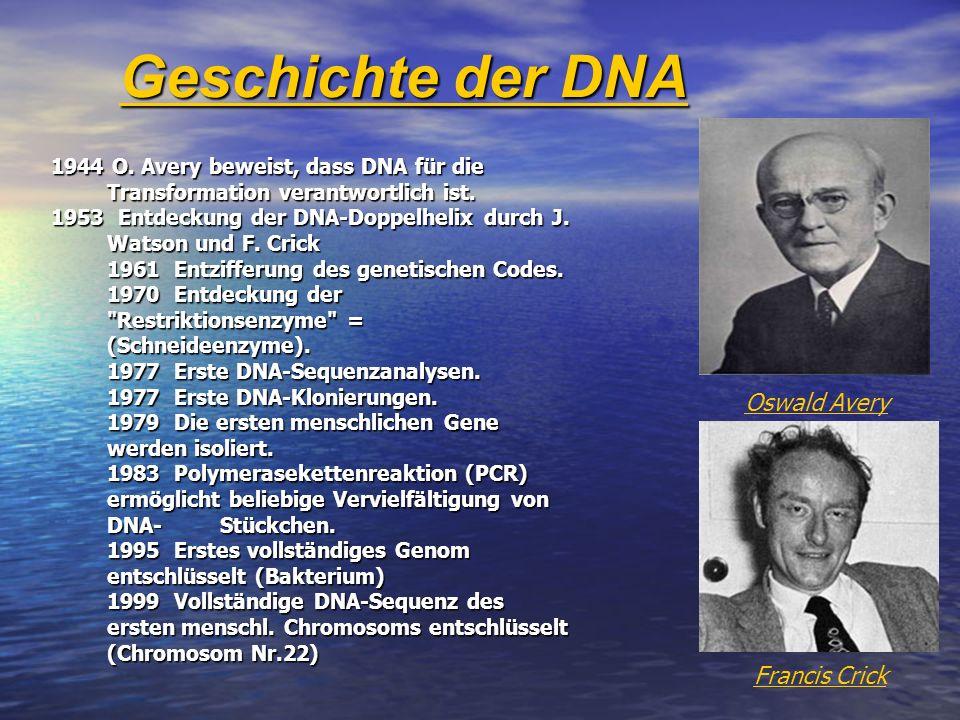 Geschichte der DNA 1944 O. Avery beweist, dass DNA für die Transformation verantwortlich ist. 1953 Entdeckung der DNA-Doppelhelix durch J. Watson und