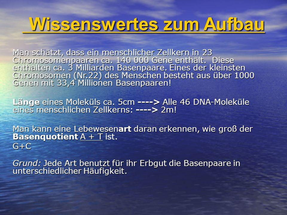Man schätzt, dass ein menschlicher Zellkern in 23 Chromosomenpaaren ca. 140 000 Gene enthält. Diese enthalten ca. 3 Milliarden Basenpaare. Eines der k