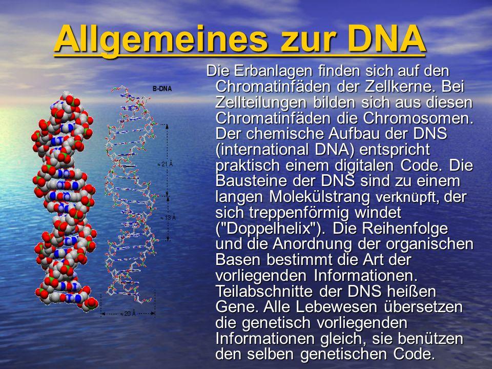 Allgemeines zur DNA Die Desoxyribonukleinsäure(DNS ), meist nach der engl.