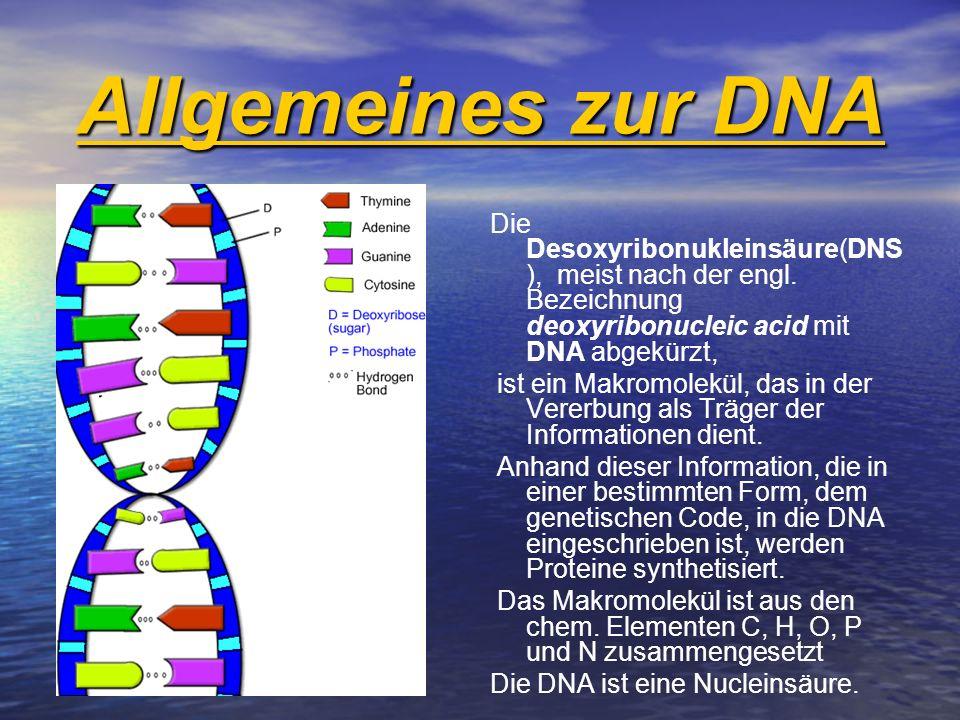 Allgemeines zur DNA Die Desoxyribonukleinsäure(DNS ), meist nach der engl. Bezeichnung deoxyribonucleic acid mit DNA abgekürzt, ist ein Makromolekül,