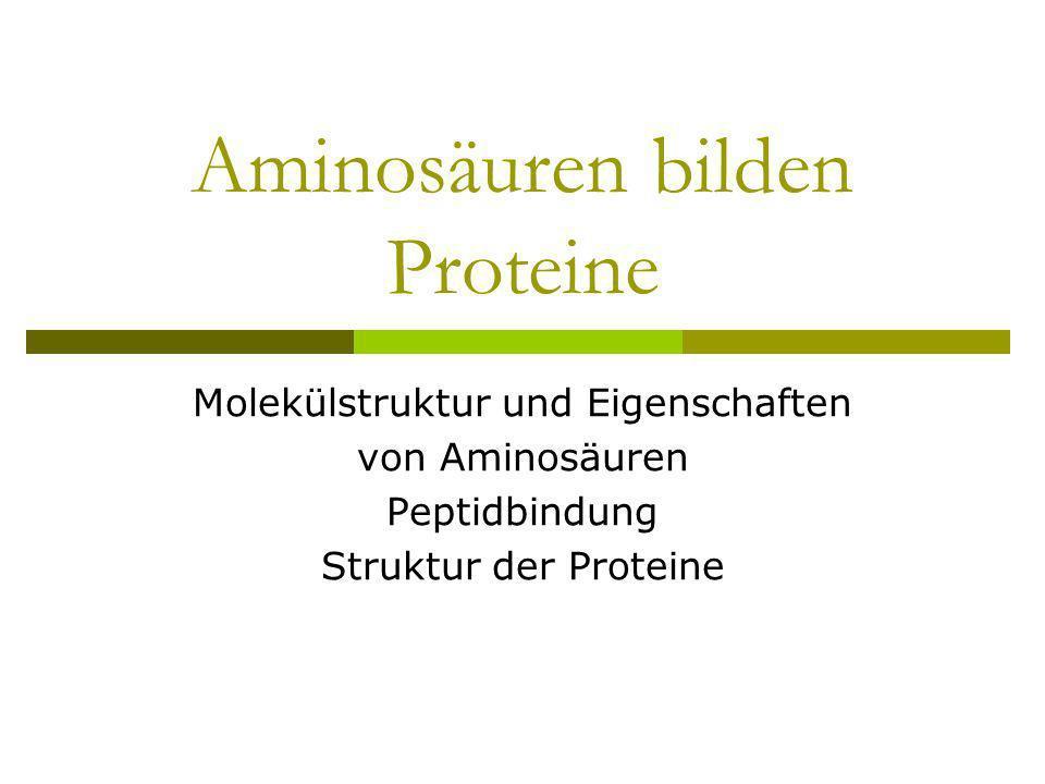Aminosäuren bilden Proteine Molekülstruktur und Eigenschaften von Aminosäuren Peptidbindung Struktur der Proteine