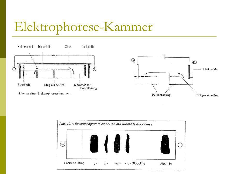 Elektrophorese-Kammer HaltemagnetTrägerfolieStartDeckplatte