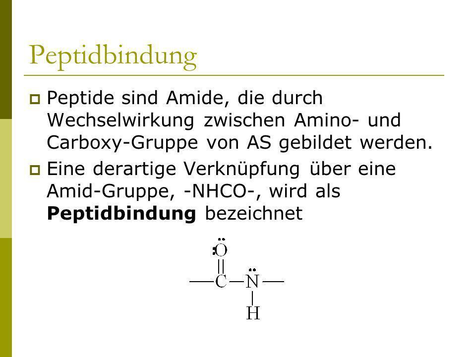 Peptidbindung Peptide sind Amide, die durch Wechselwirkung zwischen Amino- und Carboxy-Gruppe von AS gebildet werden. Eine derartige Verknüpfung über