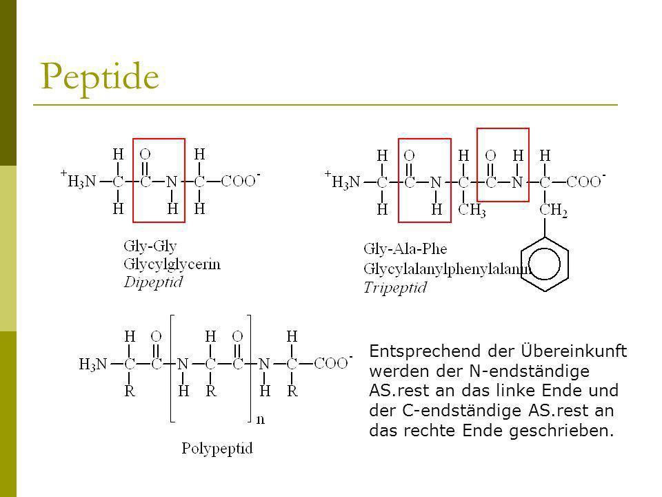 Peptide Entsprechend der Übereinkunft werden der N-endständige AS.rest an das linke Ende und der C-endständige AS.rest an das rechte Ende geschrieben.