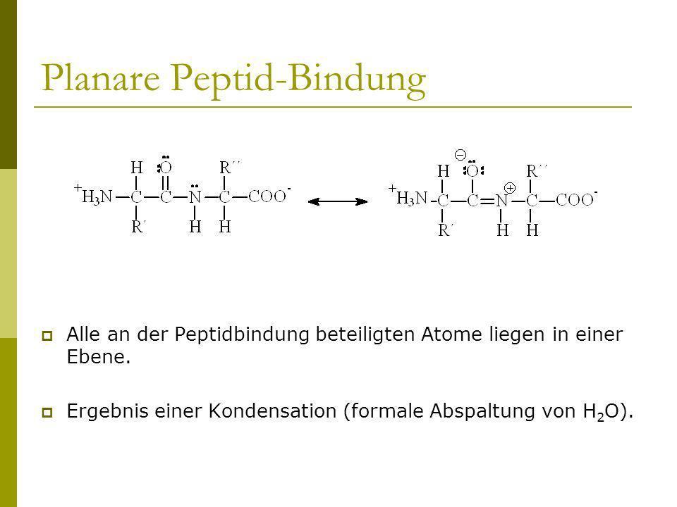Planare Peptid-Bindung Alle an der Peptidbindung beteiligten Atome liegen in einer Ebene. Ergebnis einer Kondensation (formale Abspaltung von H 2 O).