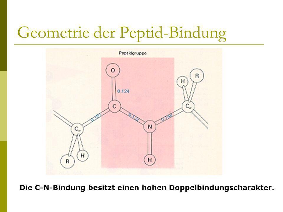 Geometrie der Peptid-Bindung Die C-N-Bindung besitzt einen hohen Doppelbindungscharakter.