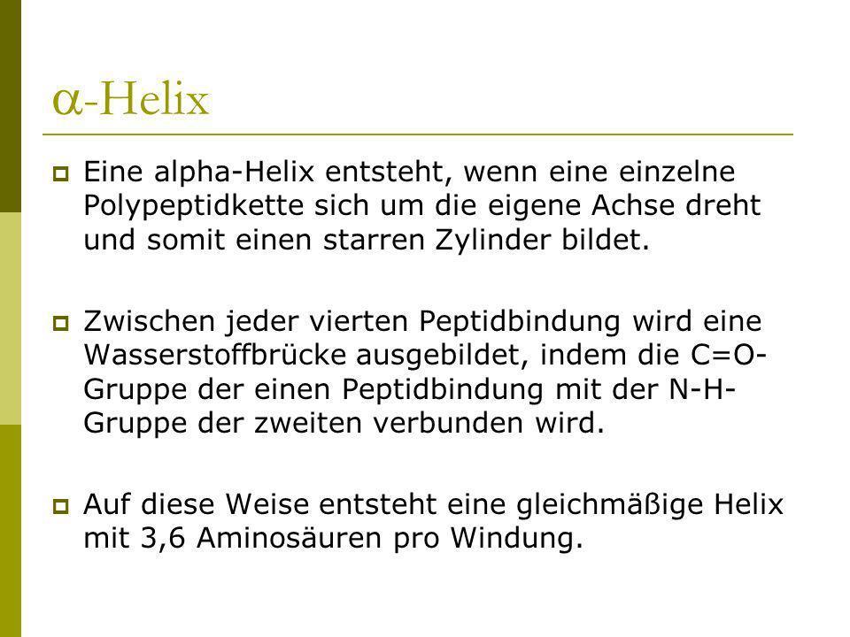 -Helix Eine alpha-Helix entsteht, wenn eine einzelne Polypeptidkette sich um die eigene Achse dreht und somit einen starren Zylinder bildet. Zwischen