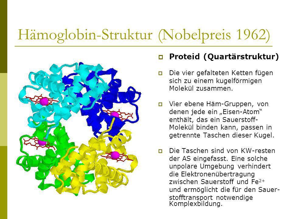 Hämoglobin-Struktur (Nobelpreis 1962) Proteid (Quartärstruktur) Die vier gefalteten Ketten fügen sich zu einem kugelförmigen Molekül zusammen. Vier eb