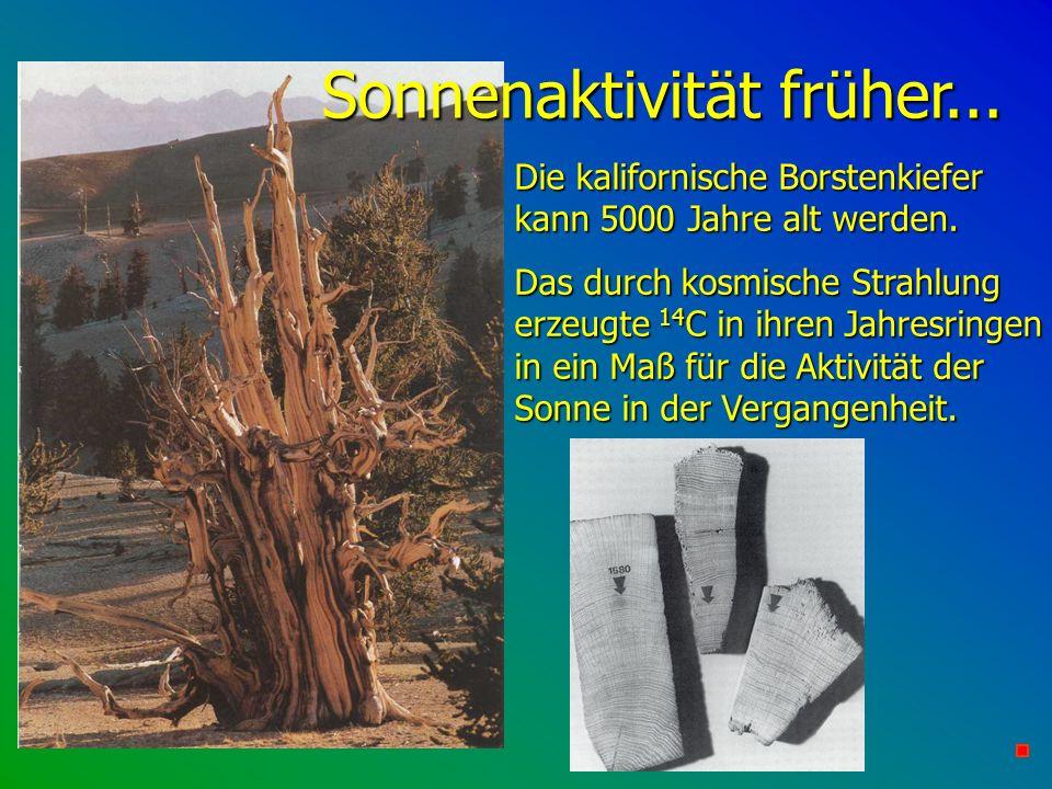 Sonnenaktivität früher... Die kalifornische Borstenkiefer kann 5000 Jahre alt werden. Das durch kosmische Strahlung erzeugte 14 C in ihren Jahresringe