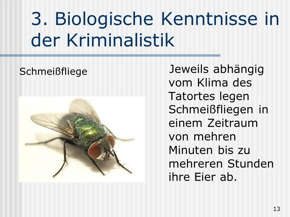 13 3. Biologische Kenntnisse in der Kriminalistik Jeweils abhängig vom Klima des Tatortes legen Schmeißfliegen in einem Zeitraum von mehren Minuten bi