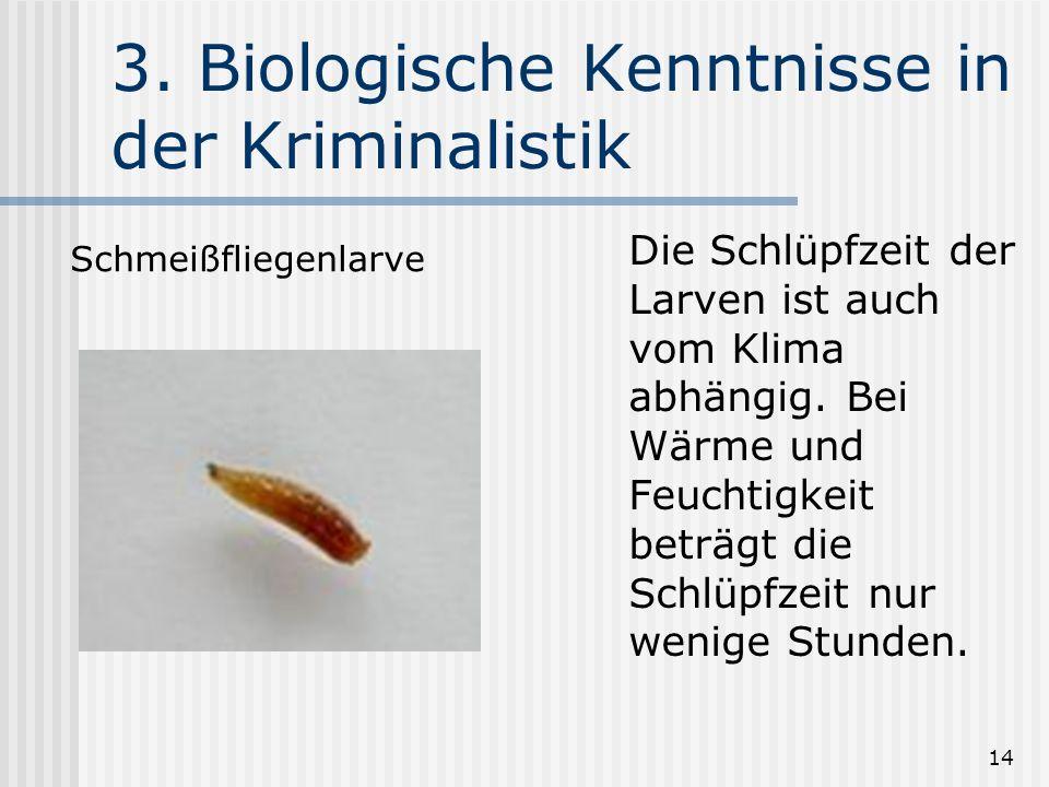 14 3. Biologische Kenntnisse in der Kriminalistik Die Schlüpfzeit der Larven ist auch vom Klima abhängig. Bei Wärme und Feuchtigkeit beträgt die Schlü