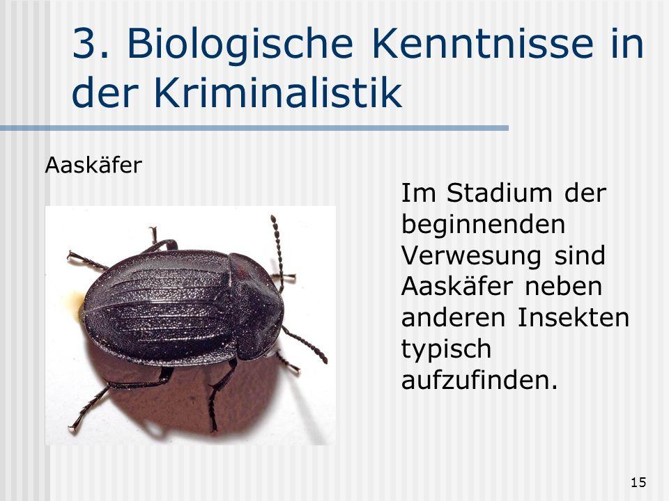 15 3. Biologische Kenntnisse in der Kriminalistik Im Stadium der beginnenden Verwesung sind Aaskäfer neben anderen Insekten typisch aufzufinden. Aaskä