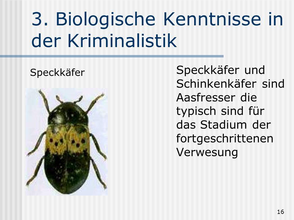 16 3. Biologische Kenntnisse in der Kriminalistik Speckkäfer und Schinkenkäfer sind Aasfresser die typisch sind für das Stadium der fortgeschrittenen