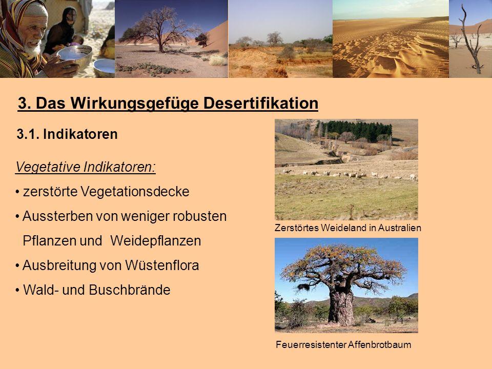 3. Das Wirkungsgefüge Desertifikation Vegetative Indikatoren: zerstörte Vegetationsdecke Aussterben von weniger robusten Pflanzen und Weidepflanzen Au
