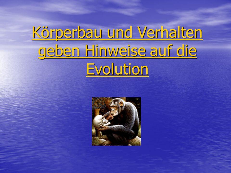 Gliederung Fachbegriffe mit Beispielen: 1a.Evolution.