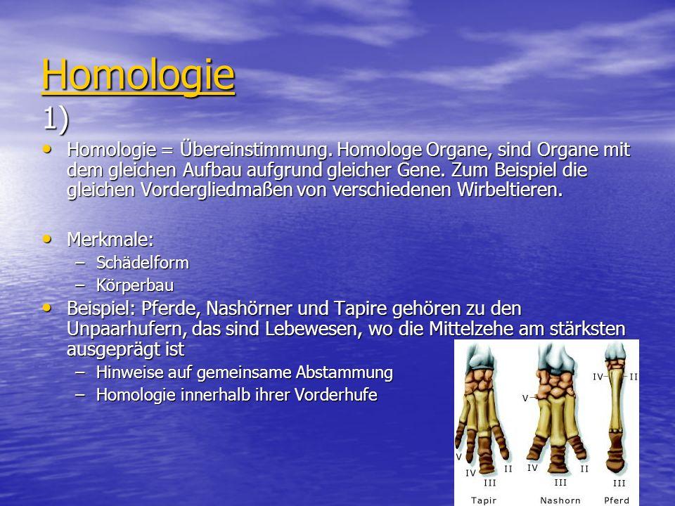 Homologie 1) Homologie = Übereinstimmung. Homologe Organe, sind Organe mit dem gleichen Aufbau aufgrund gleicher Gene. Zum Beispiel die gleichen Vorde