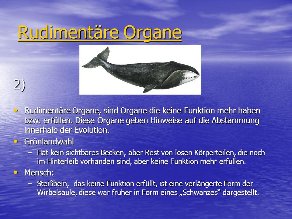 Rudimentäre Organe 2) Rudimentäre Organe, sind Organe die keine Funktion mehr haben bzw. erfüllen. Diese Organe geben Hinweise auf die Abstammung inne