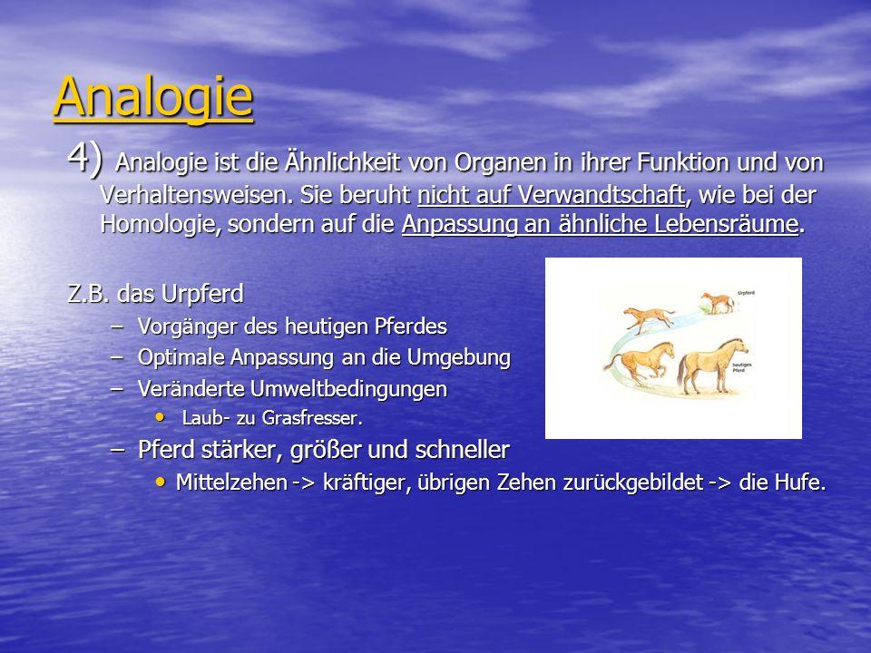Analogie 4) Analogie ist die Ähnlichkeit von Organen in ihrer Funktion und von Verhaltensweisen. Sie beruht nicht auf Verwandtschaft, wie bei der Homo
