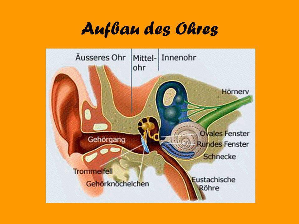 Über 85 Dezibel Schädigung von Härchen im Ohr Bei Dauereinwirkung teilweiser Hörverlust möglich Wenn die Härchen zerstört sind hört man das jemand etwas sagt aber man versteht es nicht (Cocktailparty- Effekt)