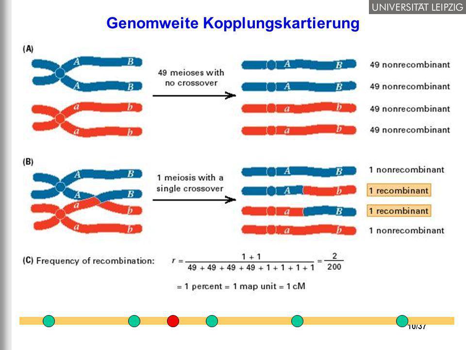10/37 Genomweite Kopplungskartierung