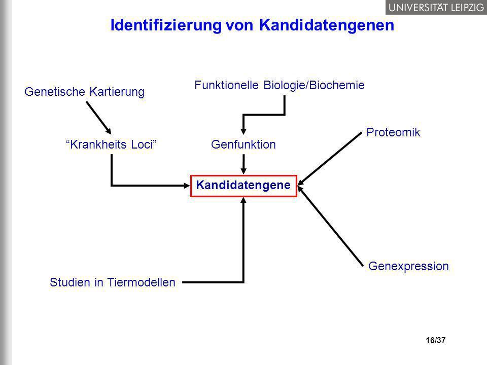 16/37 Kandidatengene Genfunktion Genetische Kartierung Funktionelle Biologie/Biochemie Genexpression Krankheits Loci Proteomik Studien in Tiermodellen