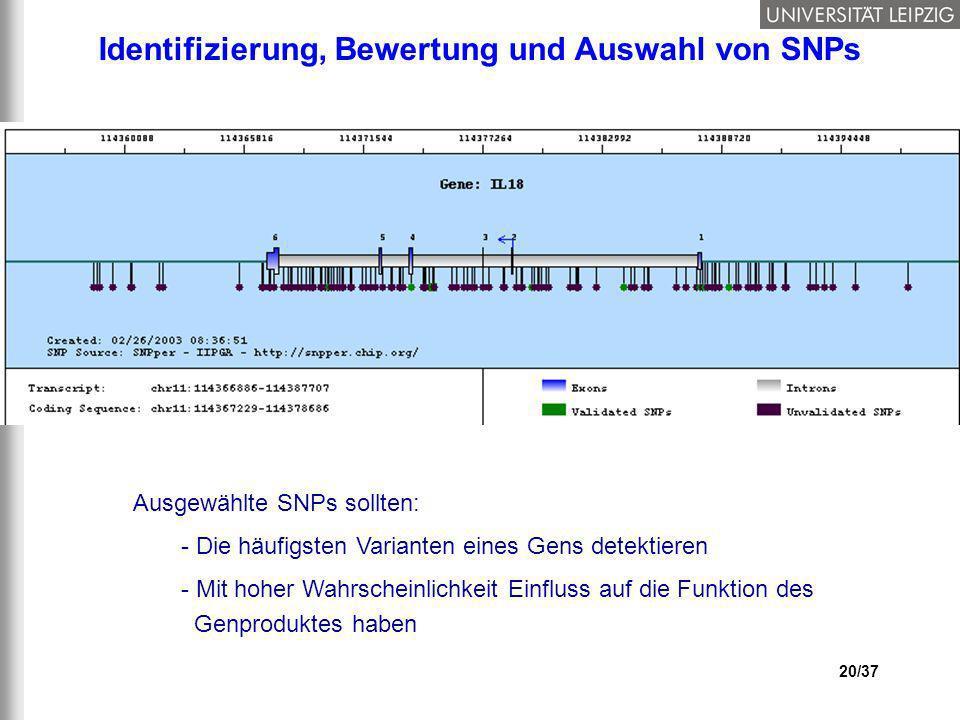20/37 Identifizierung, Bewertung und Auswahl von SNPs Ausgewählte SNPs sollten: - Die häufigsten Varianten eines Gens detektieren - Mit hoher Wahrsche