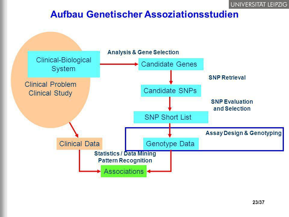 23/37 Aufbau Genetischer Assoziationsstudien Clinical Data Statistics / Data Mining Pattern Recognition Associations Clinical Problem Clinical Study C