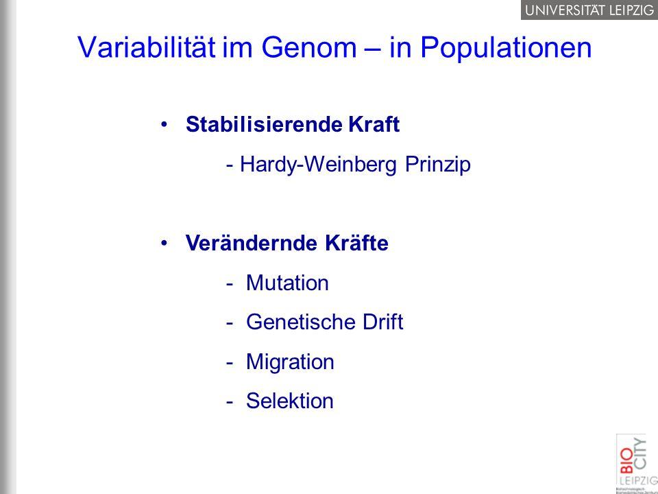 Variabilität im Genom – in Populationen Stabilisierende Kraft - Hardy-Weinberg Prinzip Verändernde Kräfte - Mutation - Genetische Drift - Migration -