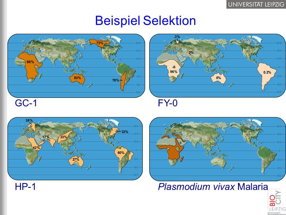 Beispiel Selektion GC-1 HP-1 FY-0 Plasmodium vivax Malaria