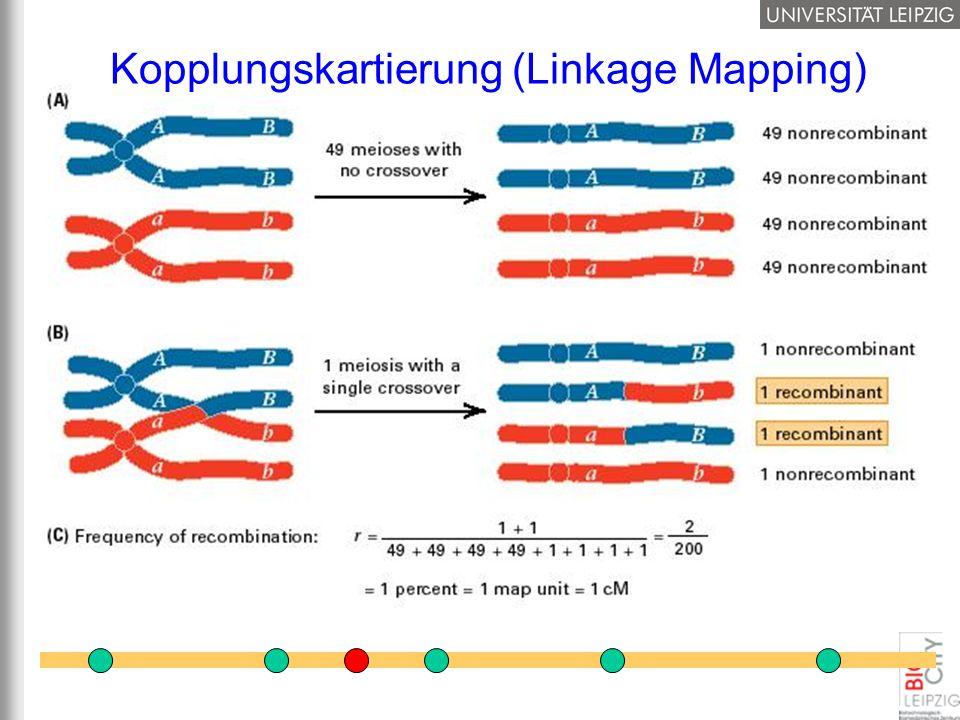 Kopplungskartierung (Linkage Mapping)