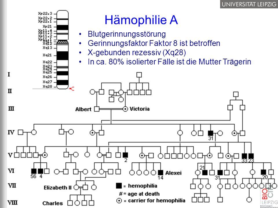 Hämophilie A Blutgerinnungsstörung Gerinnungsfaktor Faktor 8 ist betroffen X-gebunden rezessiv (Xq28) In ca. 80% isolierter Fälle ist die Mutter Träge