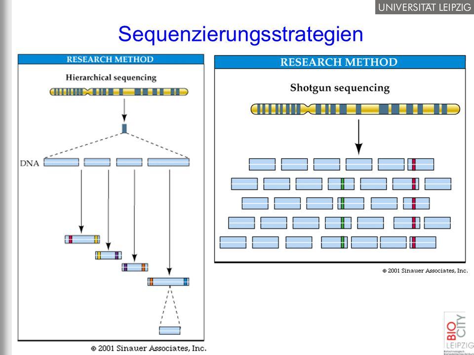Sequenzierungsstrategien