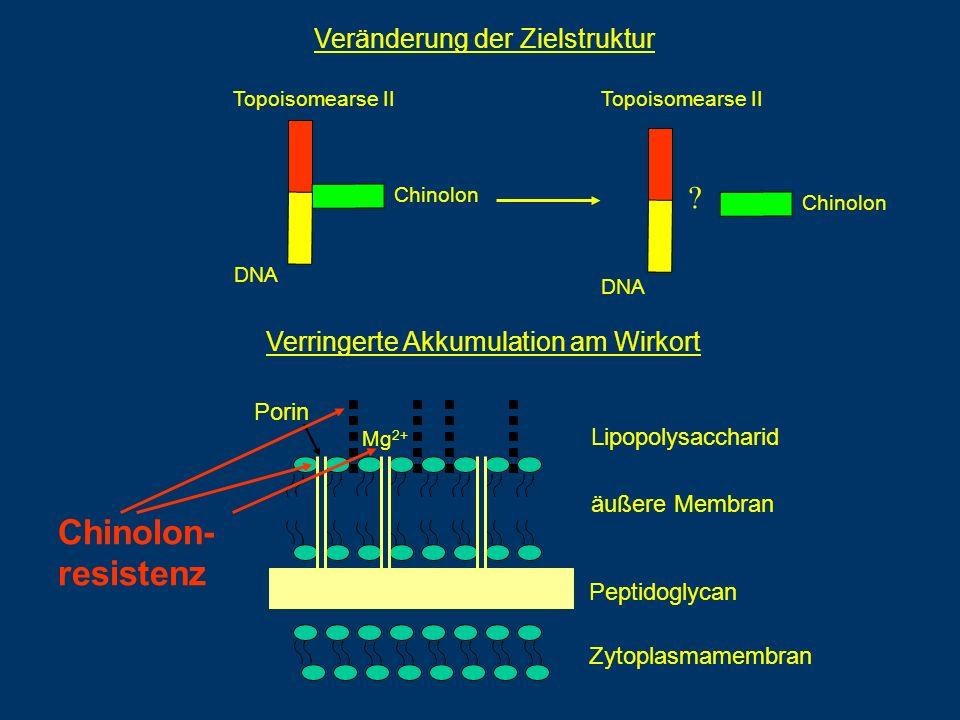 Lipopolysaccharid äußere Membran Peptidoglycan Zytoplasmamembran Porin Mg 2+ Veränderung der Zielstruktur DNA Topoisomearse II DNA Chinolon ? Topoisom