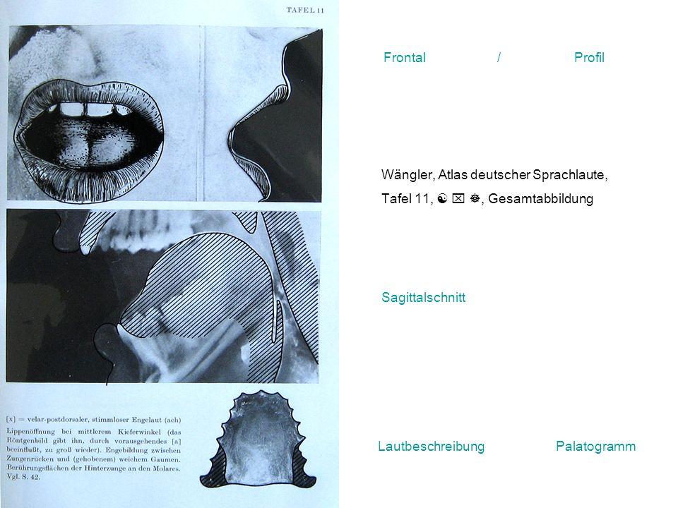 Wängler, Atlas deutscher Sprachlaute, Tafel 11,, Gesamtabbildung Frontal / Profil Sagittalschnitt Lautbeschreibung Palatogramm