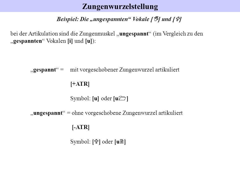 Zungenwurzelstellung Beispiel: Die ungespannten Vokale [ I ] und [ U ] bei der Artikulation sind die Zungenmuskel ungespannt (im Vergleich zu dengespa
