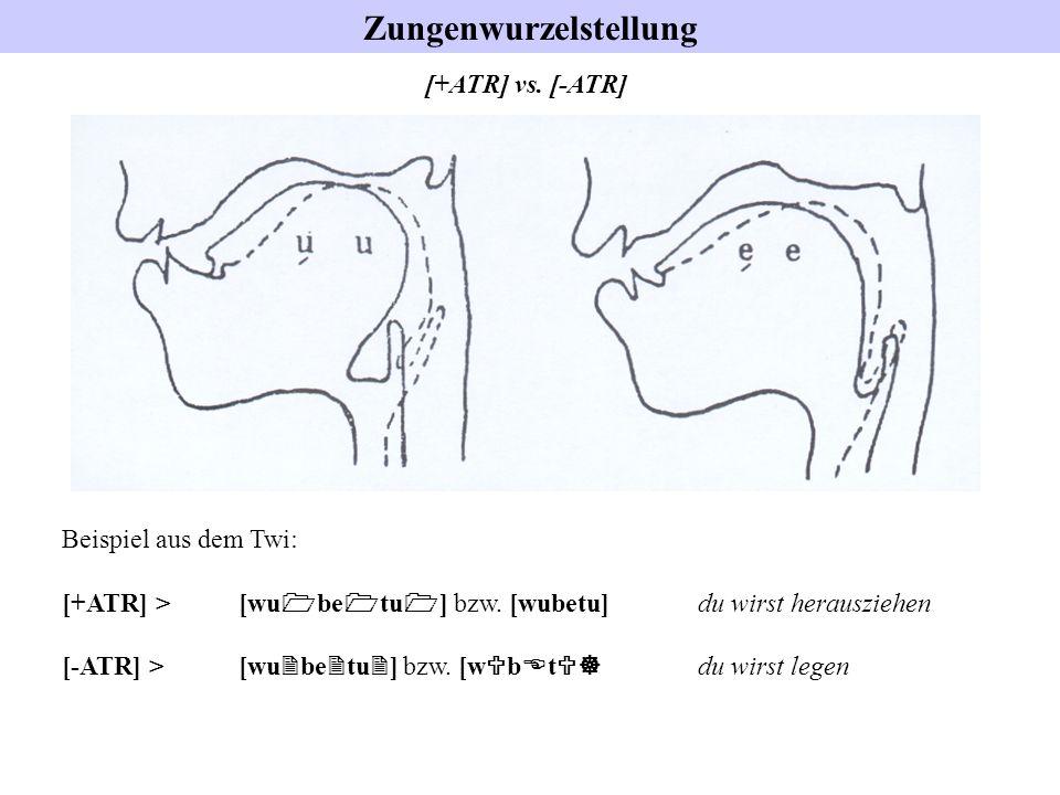 Zungenwurzelstellung [+ATR] vs. [-ATR] Beispiel aus dem Twi: [+ATR] > [wu 1 be 1 tu 1 ] bzw. [wubetu] du wirst herausziehen [-ATR] > [wu 2 be 2 tu 2 ]