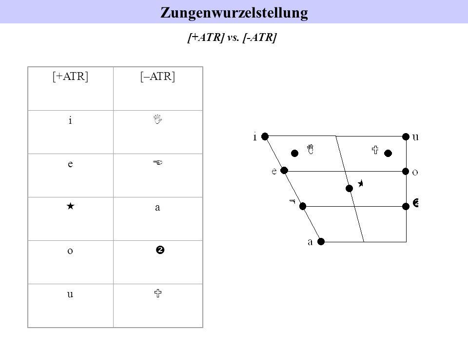 Zungenwurzelstellung [+ATR][–ATR] i I e E « a o  u U [+ATR] vs. [-ATR]