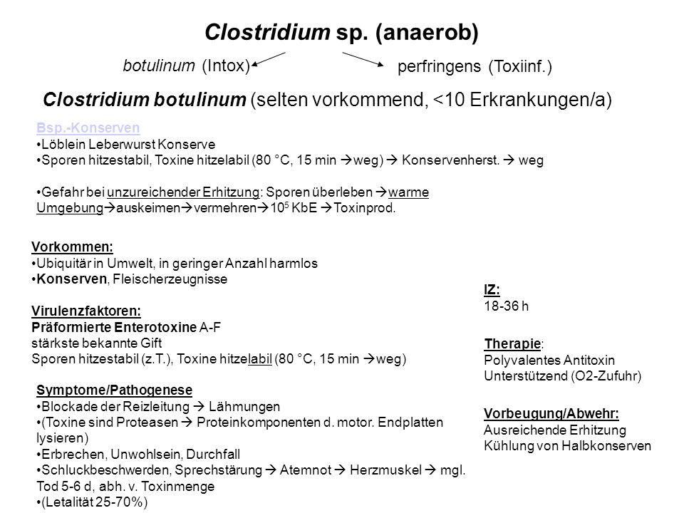 Clostridium sp. (anaerob) Vorbeugung/Abwehr: Ausreichende Erhitzung Kühlung von Halbkonserven Clostridium botulinum (selten vorkommend, <10 Erkrankung