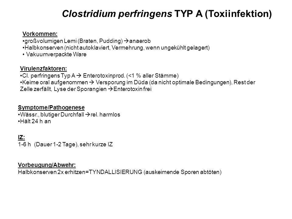 Clostridium perfringens TYP A (Toxiinfektion) Vorbeugung/Abwehr: Halbkonserven 2x erhitzen=TYNDALLISIERUNG (auskeimende Sporen abtöten) Vorkommen: großvolumigen Lemi (Braten, Pudding) anaerob Halbkonserven (nicht autoklaviert, Vermehrung, wenn ungekühlt gelagert) Vakuumverpackte Ware Virulenzfaktoren: Cl.