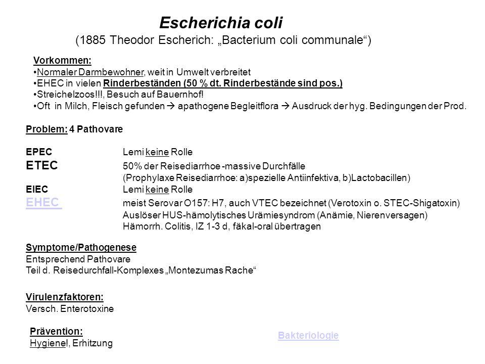 Escherichia coli (1885 Theodor Escherich: Bacterium coli communale) Vorkommen: Normaler Darmbewohner, weit in Umwelt verbreitet EHEC in vielen Rinderb