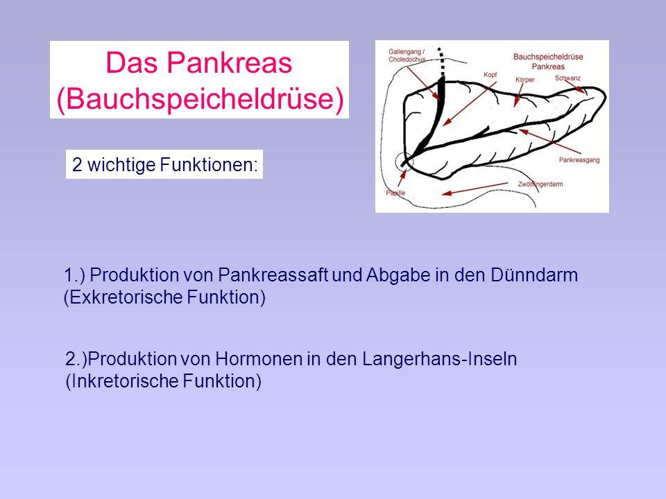 Das Pankreas (Bauchspeicheldrüse) 2 wichtige Funktionen: 1.) Produktion von Pankreassaft und Abgabe in den Dünndarm (Exkretorische Funktion) 2.)Produktion von Hormonen in den Langerhans-Inseln (Inkretorische Funktion)