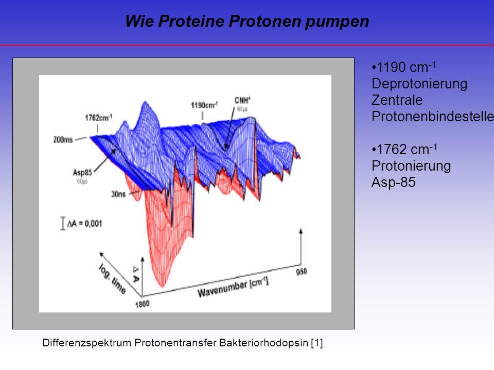 Wie Proteine Protonen pumpen 1190 cm -1 Deprotonierung Zentrale Protonenbindestelle 1762 cm -1 Protonierung Asp-85 Differenzspektrum Protonentransfer