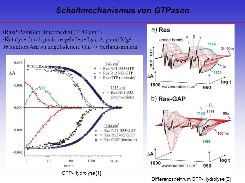Schaltmechanismus von GTPasen GTP-Hydrolyse [1] Differenzspektrum GTP-Hydrolyse [2] Ras(*Ras)Gap: Intermediat (1143 cm -1 ) Katalyse durch positive ge