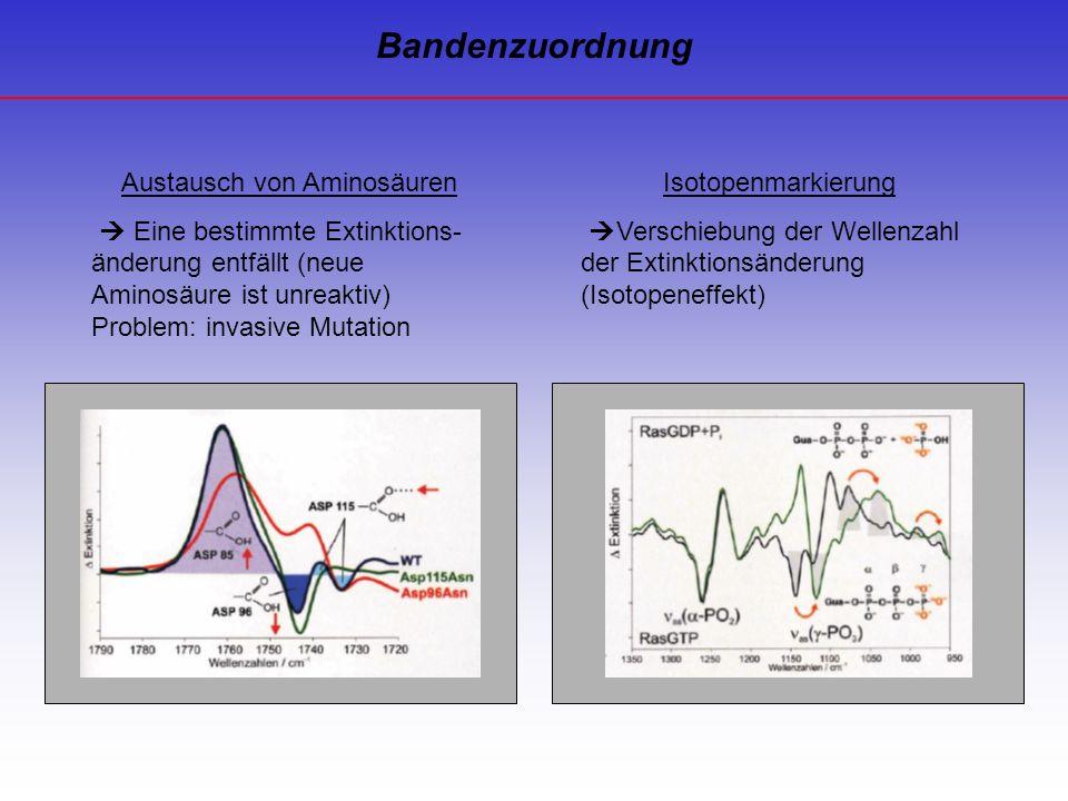 Austausch von Aminosäuren Eine bestimmte Extinktions- änderung entfällt (neue Aminosäure ist unreaktiv) Problem: invasive Mutation Isotopenmarkierung