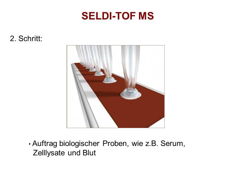 SELDI-TOF MS 2. Schritt: Auftrag biologischer Proben, wie z.B. Serum, Zelllysate und Blut